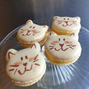 Katten macarons